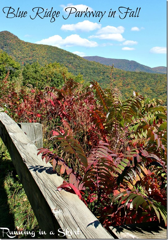 Blue Ridge Parkway Fall!  So gorgeous!