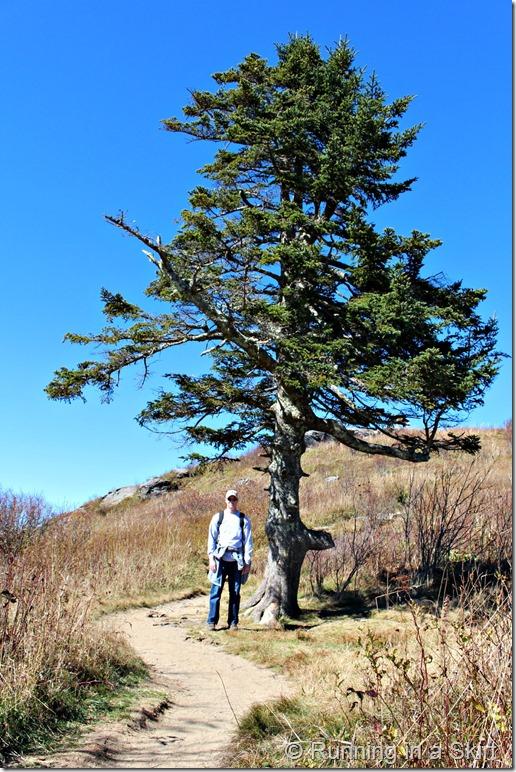 black-balsam-hike-tree