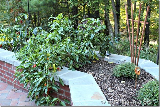 pepper-garden