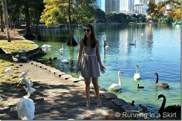 lake eola ducks 3