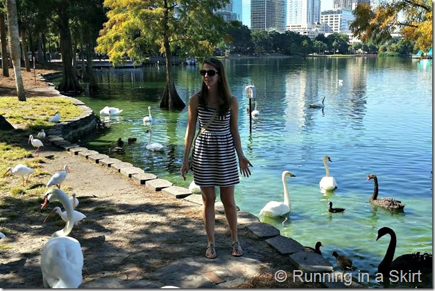 lake eola ducks 3