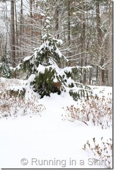 Snow Feb 2015-43-1
