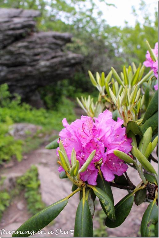 craggy gardens hike-125-7