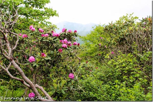 craggy gardens hike-58-4
