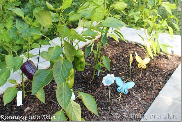 garden july 2015-4-4