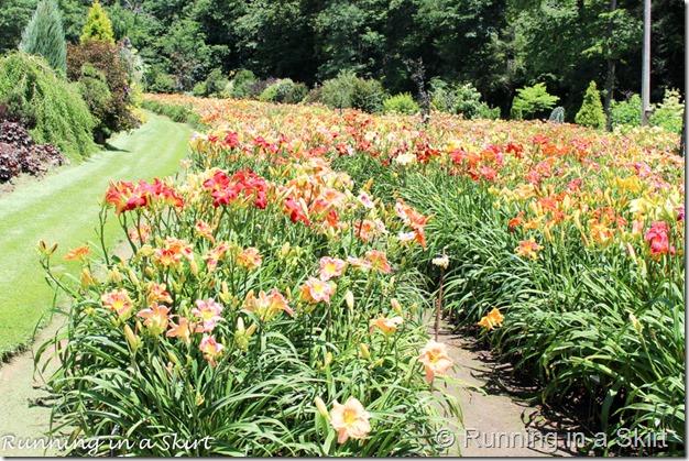 Blue Ridge Day Lilly Farm-2-1
