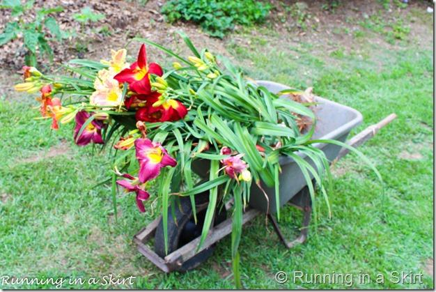 Blue Ridge Day Lilly Farm-33-6