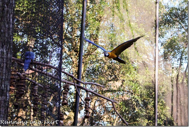 Parque das Aves - Iguazu Bird Park