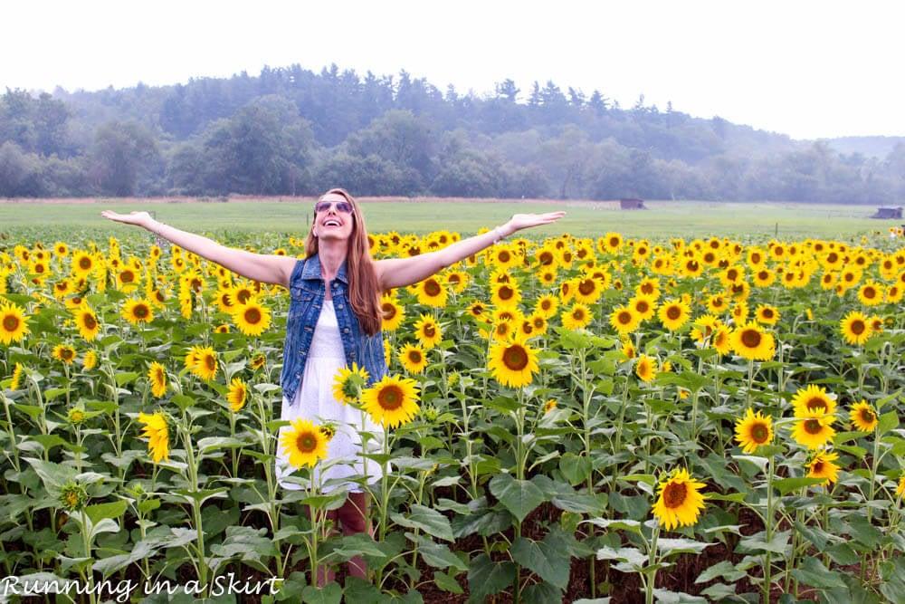 biltmore estate sunflowers t
