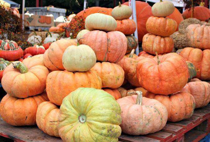 wnc_farmers_market_pumpkins