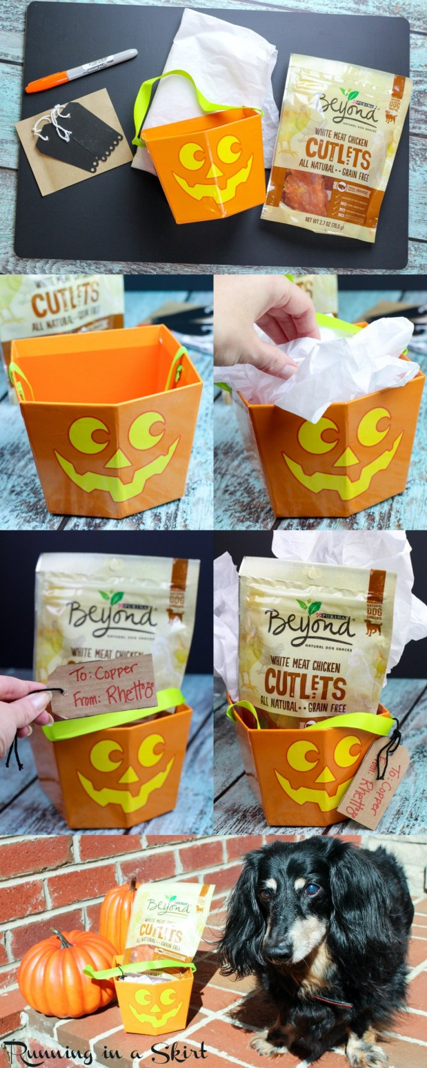 Dog Trick or Treating with Purina Beyond