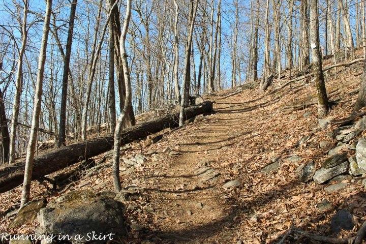 Trail to get to Bearwallow Mountain near Asheville.