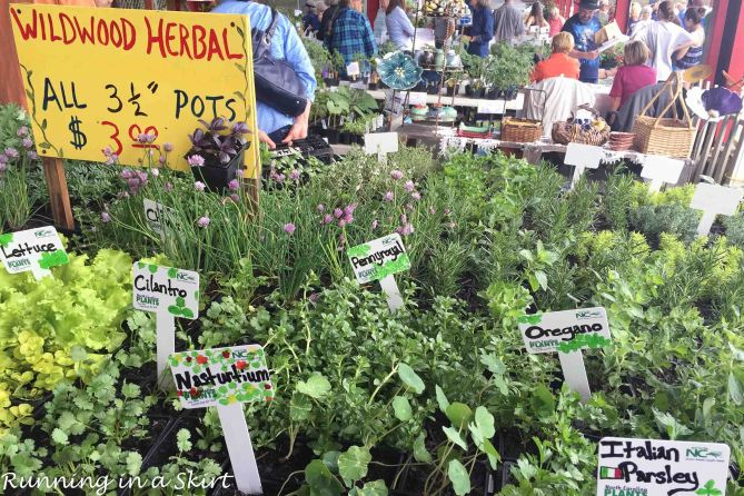Herb Festival 2016 -2
