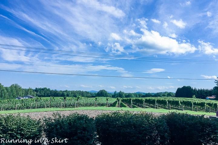 Burntshirt Vineyards view