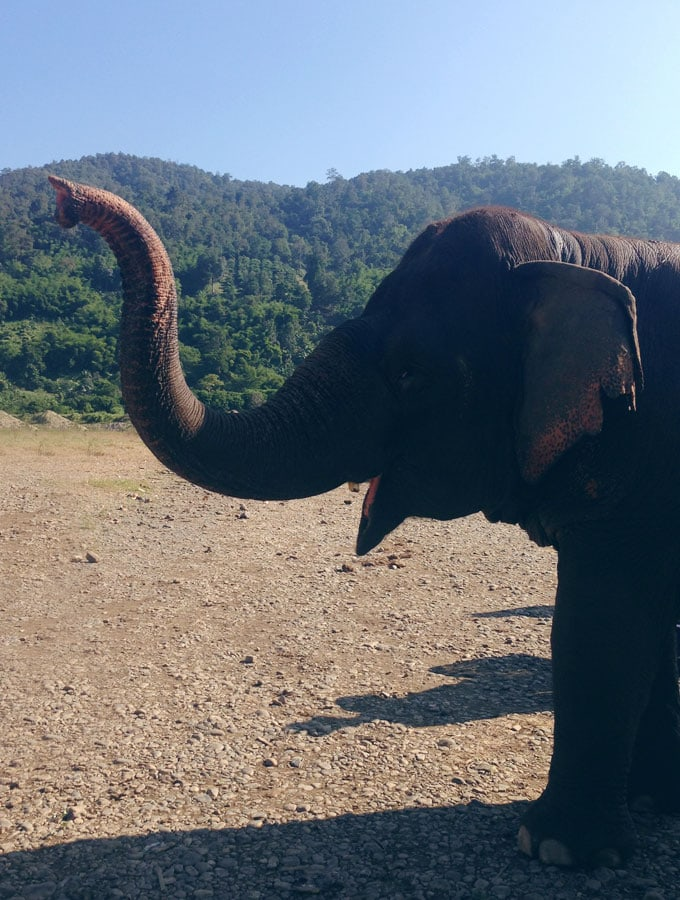 Beautiful Chiang Mai Elephant Nature Park