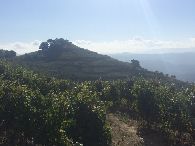 Vineyards in all forms