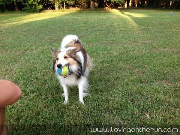 Fetch with Zoe