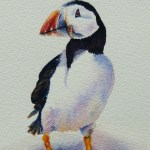 Watercolour painting. Mr Puffin (NBA001) Artist: Nicole Barros