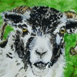 Watercolour painting. Swaledale Sheep (MVA003). Artist: Marily Valkijainen