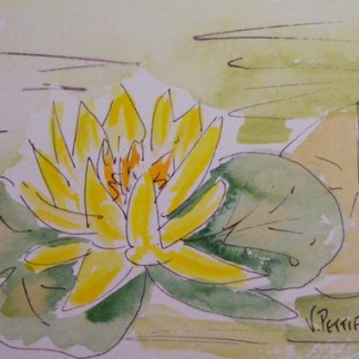 Watercolour painting. Waterlily (OSS001) Artist: Val Pettifer
