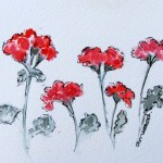 Watercolour painting. Pelargonium Parade (IOA034). Artist: Ingrid Ormestad