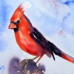 Watercolour Painting. Northern Cardinal (POB007) Artist: Polly Birchall