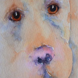 watercolour painting. SBA001 Labrador. Artist: Sue Bradley