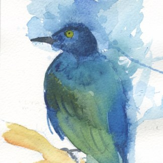 Watercolour painting. LBA044 Glossy Starling. Artist: Lori Bentley