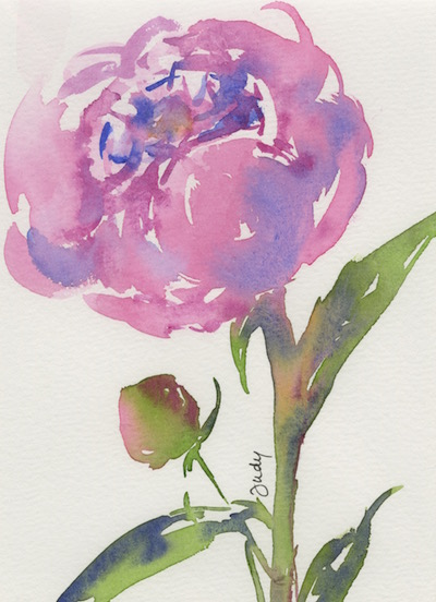 Watercolour painting. JBA010 Pink Peony. Artist: Judy Barends