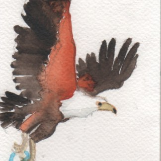Watercolour painting. LBA062 African Fish Eagle. Artist: Lori Bentley