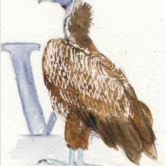 Watercolour painting. LBA079 Lappet-faced Vulture. Artist: Lori Bentley