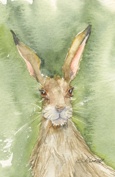 Watercolour painting. SPA 022 Big Ears. Artist: Seonaid Parnell
