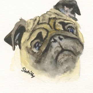 Watercolour painting. SWA012 - Pug.