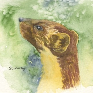 Watercolour painting. SWA014 - Pine Marten.