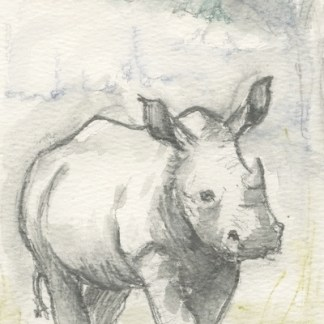 Watercolour painting. LBA093 Baby Rhino Artist: Lori Bentley