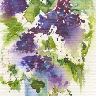 Watercolour painting. RWB0308 Lilac and Hawthorne. Artist: Vandy Massey