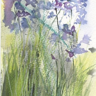 Watercolour painting. RWB0315 May's Delight. Artist: Vandy Massey