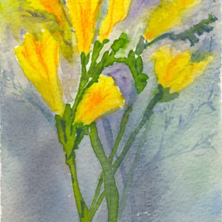 Watercolour and ink painting. RWB0323 Sunlight Freesias. Artist: Vandy Massey