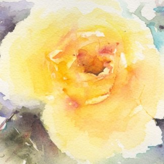 Watercolour painting. CLA001 In Full Bloom Artist: Chris Lockood