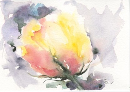 Watercolour painting. CLA002 In Bud Artist: Chris Lockood