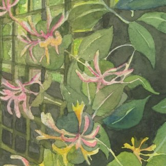Watercolour painting. HO010 Honeysuckle and Fence. Artist: Helen Otter
