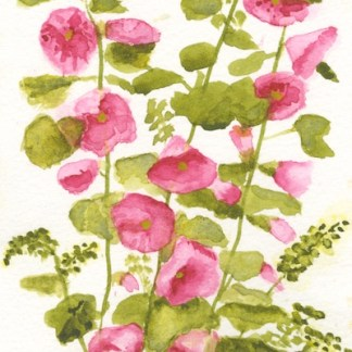 Watercolour painting. SHA003 Hollyhocks. Artist: Sarah Haynes