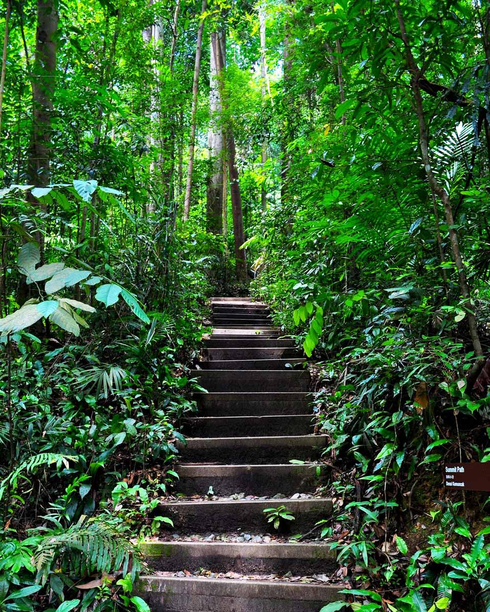 Trail Running in Singapore: 3 Trails to Get You Started