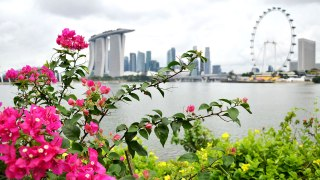 Adore Nature: 10 Plants You Can Discover Along Singapore's Running Trails