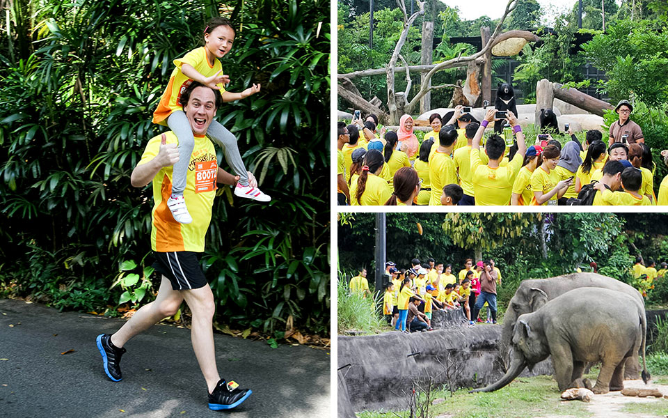Roaring Good Times at Safari Zoo Run 2015