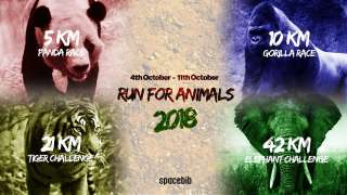The Animals Depend On You To Run For Them This Time!