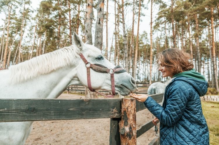 How to Start an Equine Therapy Program