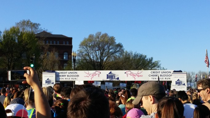 cherry blossom run starting line
