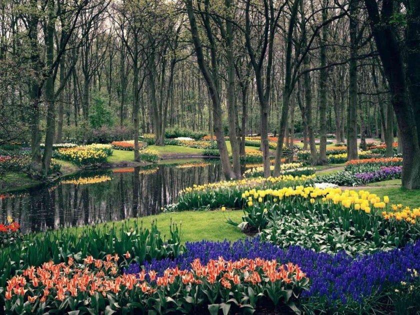 حديقة كيوكنهوف أجمل حديقة في العالم 5
