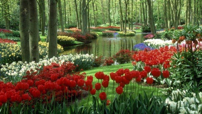 حديقة كيوكينهوف أجمل حديقة في العالم 7